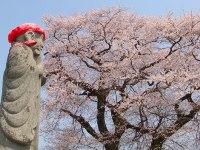 伊野地蔵の桜02