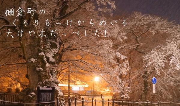 『『まちのシンボル、城跡の樹齢600余年の大けや木』の画像』の画像