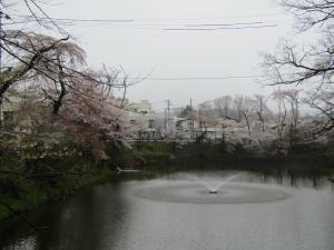 『1城跡北 桜 0418』の画像