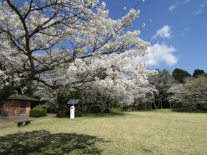 『赤館公園(アップ)4月9日』の画像