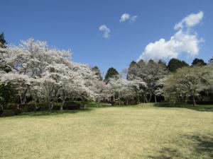 『赤館公園4月9日』の画像