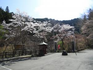 『山本不動(駐車場)4月9日』の画像