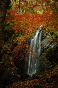 『16風景の部入選 紅葉不動大滝』の画像