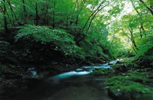 『『15風景の部入選久慈川渓流』の画像』の画像