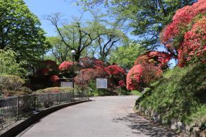 『亀ヶ城公園4_26_1』の画像