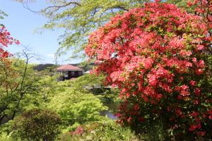 『亀ヶ城公園4_26_3』の画像