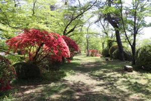 『亀ヶ城公園4_26_4』の画像