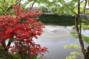 『亀ヶ城公園5_01(3)』の画像