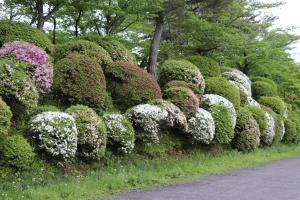 『亀ヶ城公園5_10(1)』の画像