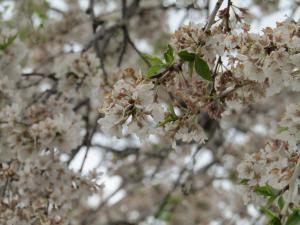 『花園(2)4月19日』の画像