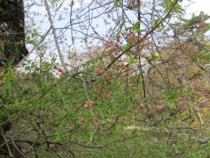 『城跡南(3)4月22日』の画像