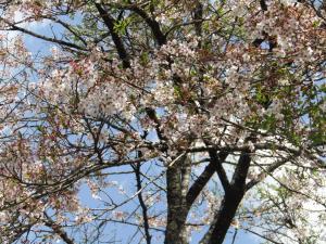 『山本(2)4月22日』の画像