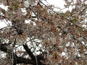 花園(2) 4月13日