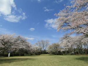 赤館公園(1) 4月6日